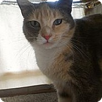 Adopt A Pet :: Reese Witherspoon - Richboro, PA