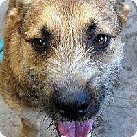 Adopt A Pet :: Polly - Oakley, CA