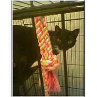 Adopt A Pet :: Tux - Owasso, OK
