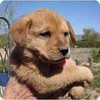 Adopt A Pet :: Jed *Adopted* - Phoenix, AZ