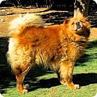 Adopt A Pet :: Ted E. Bear (Courtesy Listing) - Scottsdale, AZ
