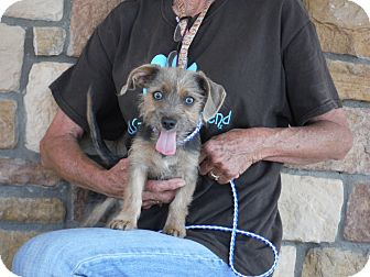 Terrier (Unknown Type, Medium) Mix Dog for adoption in Artesia, New Mexico - June Bug