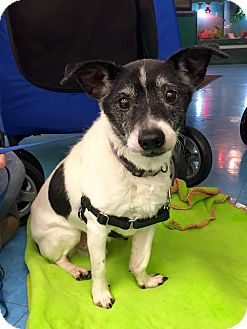 Terrier (Unknown Type, Small) Mix Dog for adoption in Cleveland, Ohio - Glen Campbell