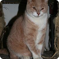 Adopt A Pet :: Parcheesi - Santa Rosa, CA