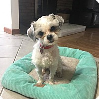 Adopt A Pet :: Clarence - Troy, MI