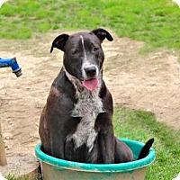 Adopt A Pet :: SUNDANCE KIDD - Hagerstown, MD