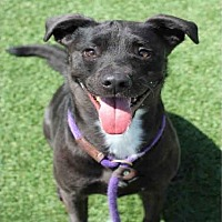 Adopt A Pet :: JERGUS - Los Angeles, CA