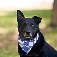 Adopt A Pet :: MAURICE - San Luis Rey, CA