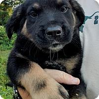 Adopt A Pet :: Achilles $250 - Seneca, SC