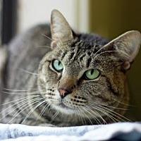 Adopt A Pet :: PLUMBOB - Kyle, TX