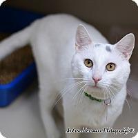 Adopt A Pet :: Casper - East Hartford, CT