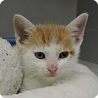 Adopt A Pet :: Malone - Massapequa, NY
