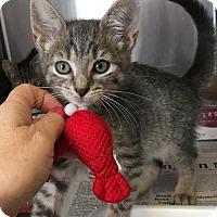 Adopt A Pet :: Tampa - East Brunswick, NJ