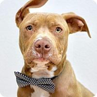 Adopt A Pet :: Guppy - Dublin, CA