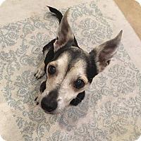 Adopt A Pet :: Eden - Las Vegas, NV