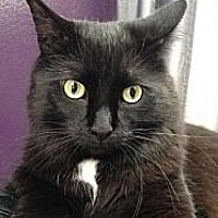 Adopt A Pet :: Barry (+Bubbles) - Richmond Hill, ON