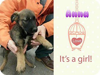 German Shepherd Dog Mix Puppy for adoption in Louisburg, North Carolina - Anna