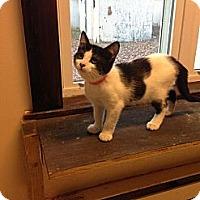 Adopt A Pet :: Lauder - Lancaster, MA