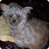 Adopt A Pet :: Colleen - Dartmouth, MA