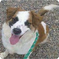 Adopt A Pet :: Winnie - Glendale, AZ