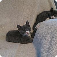 Adopt A Pet :: Hazelnut - South Plainfield, NJ
