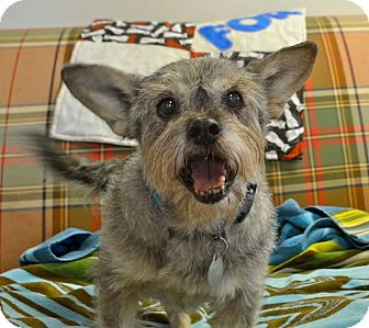 Terrier (Unknown Type, Small) Mix Dog for adoption in Huntsville, Alabama - Pebbles