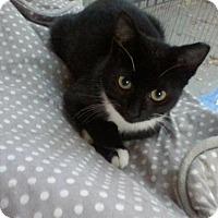 Adopt A Pet :: Blue - Sacramento, CA