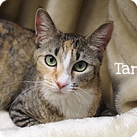 Adopt A Pet :: Tara - Foothill Ranch, CA