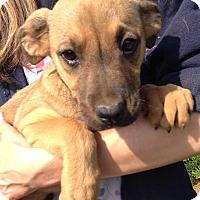 Adopt A Pet :: Flicka (10 lb) New Pics! - SUSSEX, NJ