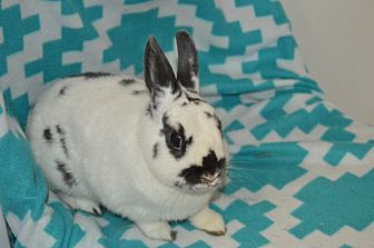 Polish for adoption in Erie, Pennsylvania - Patches