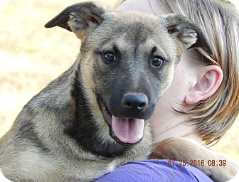 German Shepherd Dog/Retriever (Unknown Type) Mix Puppy for adoption in SUSSEX, New Jersey - Foxfire (22 lb) Video!