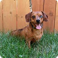Adopt A Pet :: Tag Along - McArthur, CA