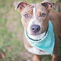 Adopt A Pet :: Pluto - Kingwood, TX