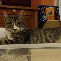 Adopt A Pet :: Nina - Flushing, NY