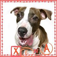Adopt A Pet :: Xena - Des Moines, IA