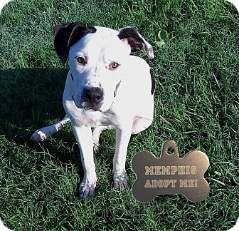 Pit Bull Terrier Mix Dog for adoption in Pittsburgh, Pennsylvania - Memphis