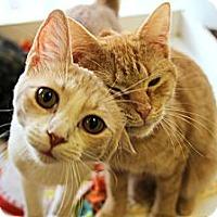 Adopt A Pet :: Annie - Mobile, AL