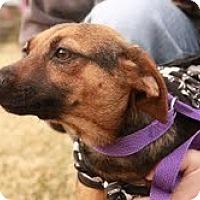 Adopt A Pet :: Miss Highway :)  100$ off adop - Staunton, VA