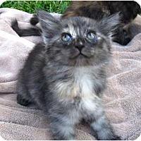 Adopt A Pet :: Candi - lake elsinore, CA