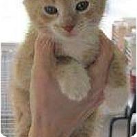 Adopt A Pet :: Buffy - Warren, MI