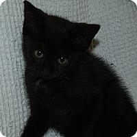 Adopt A Pet :: Tillie - Acme, PA