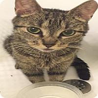 Adopt A Pet :: Lupita - New  York City, NY