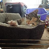 Adopt A Pet :: Chloe - Portland, ME