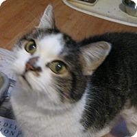 Adopt A Pet :: Gigli - St. Paul, MN