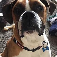 Adopt A Pet :: Jax - ADOPTED - Troy, MI