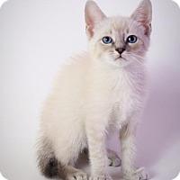 Adopt A Pet :: Mario - Baton Rouge, LA