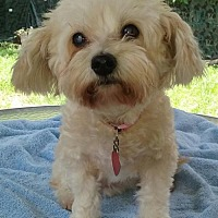 Adopt A Pet :: DaisyAnn (FL) - Gainesville, FL