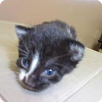 Adopt A Pet :: Bella - Princeton, WV