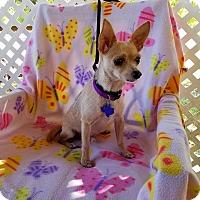 Adopt A Pet :: Jenks - Toronto, ON