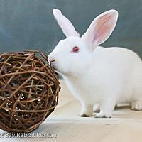 Adopt A Pet :: Tuttle - Livermore, CA
